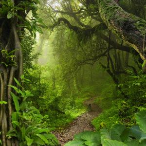 path on jungle